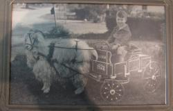 Tony A. Burnett, Jr. as a child in Pasadena, California, riding in a wagon pulled by a goat. Courtesy of Emilie Kendrick