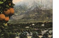 Oranges MT SB, c1940. Courtesy of Redlands Historical Society